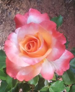 SUMMER OF LOVE LOTS OF FLOWERS (3)