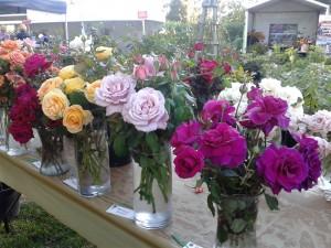 Expo Vases 4