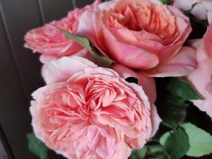 rose cafe kordes